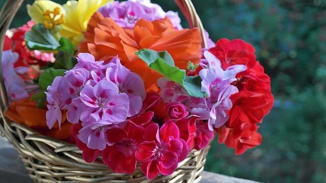 ゼラニウムの花言葉と種類