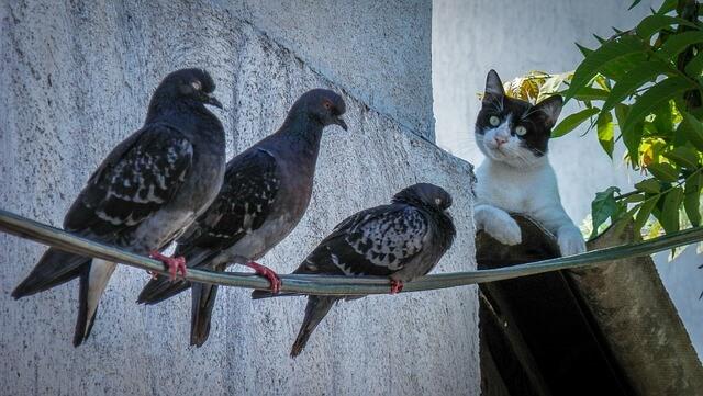 ゼラニウムは猫よけ鳩よけになる?